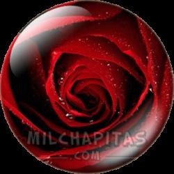 Rosa roja 2